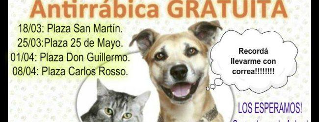 Campaña de vacunación para perros y gatos