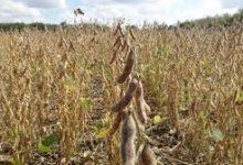 Los senadores piden que se declare la emergencia por sequía