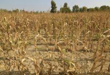 Extienden el plazo para entrar en la emergencia agropecuaria